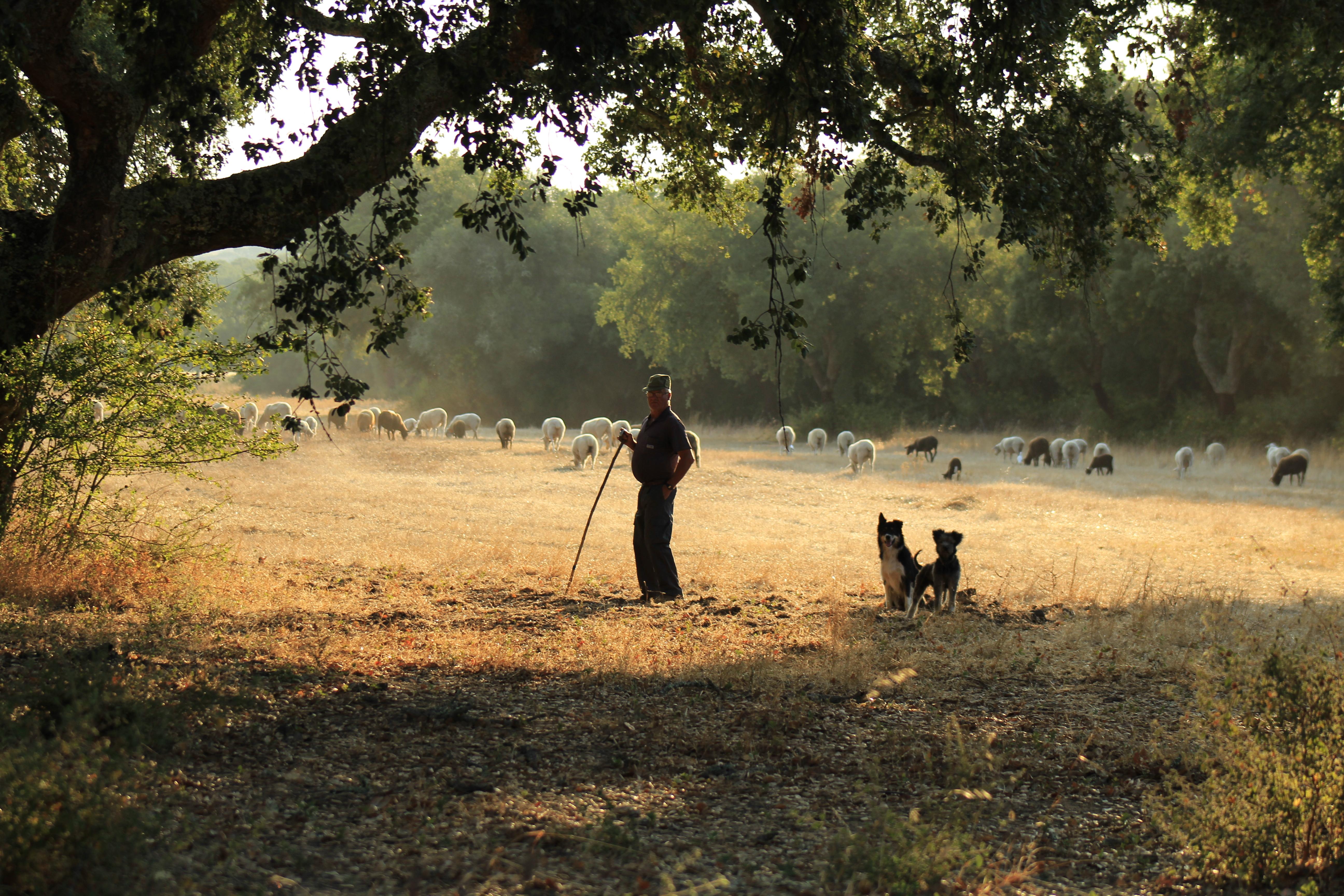 A shepherd in the Alentejo